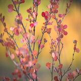 colorado, fall, leaves, red, rocky mountains, san juan mountains, square, yellow
