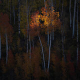 aspen, colorado, fall, orange, red, rocky mountains, san juan mountains, square, tree