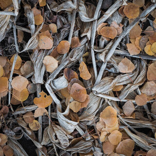 colorado, crested butte, fall, leaves, rocky mountains, square