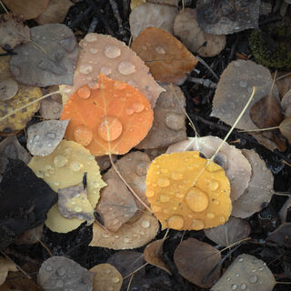 aspen, colorado, crested butte, fall, leaves, orange, red, rocky mountains, square, tree, yellow