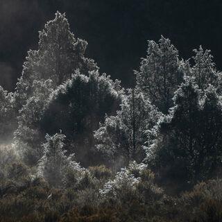 colorado, fall, frost, pine, rocky mountains, san juan mountains, square, tree, white
