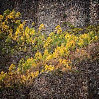 aspen, colorado, fall, green, rocky mountains, san juan mountains, square, tree, yellow
