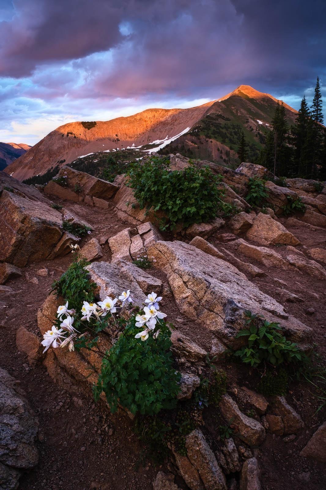Flower, Time, Wildflower, alpine, blue, colorado, columbines, crested butte, green, orange, purple, rocky mountains, sunset