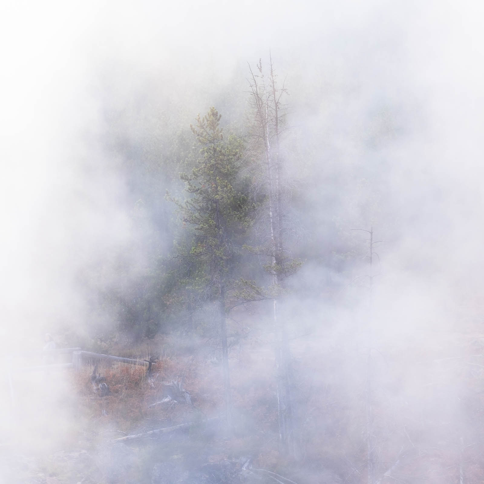 Wyoming, fog, greeen, square, tree, white, yellowstone national park, ynp, rocky mountains
