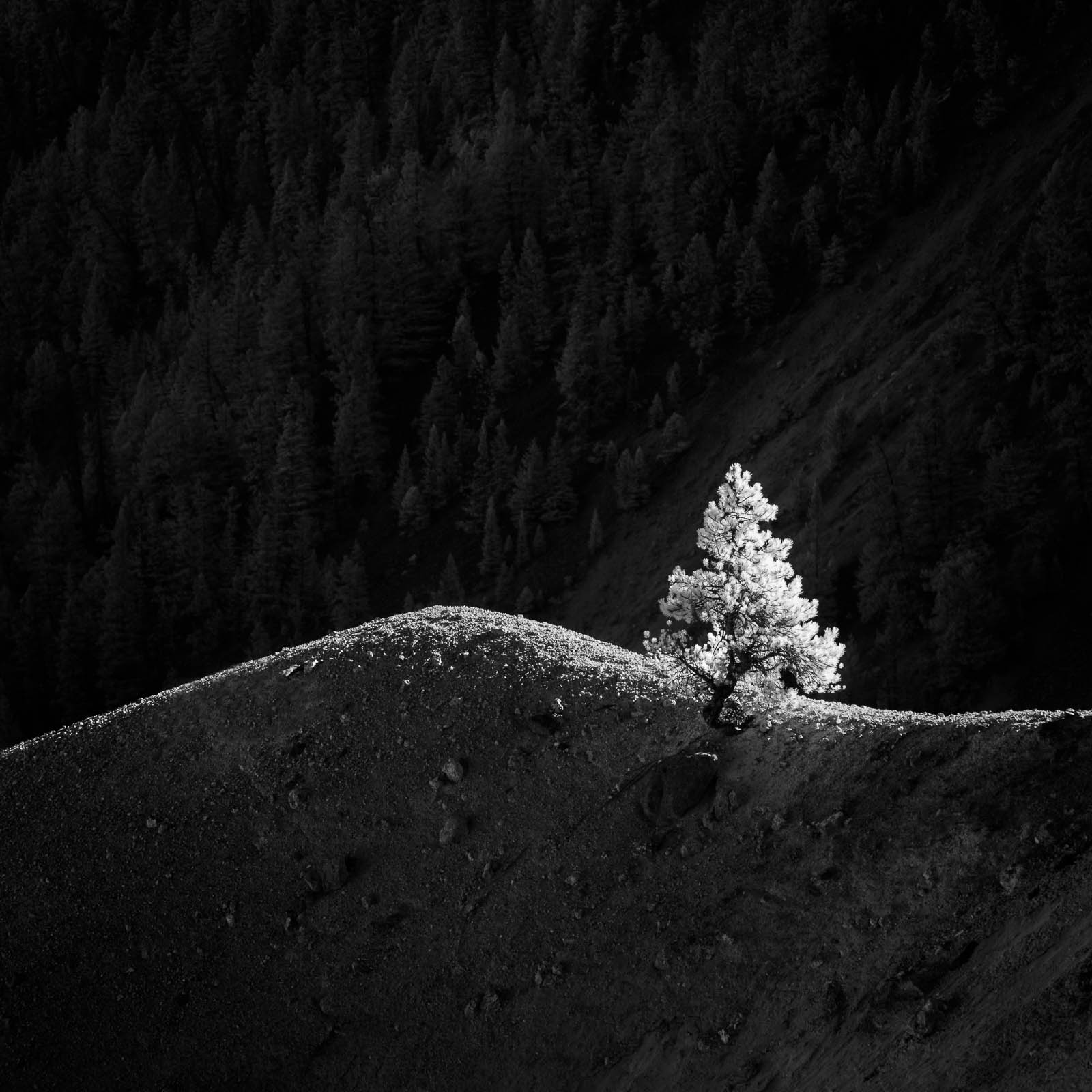 Wyoming, black and white, infrared, monochrome, square, tree, yellowstone national park, ynp, rocky mountains
