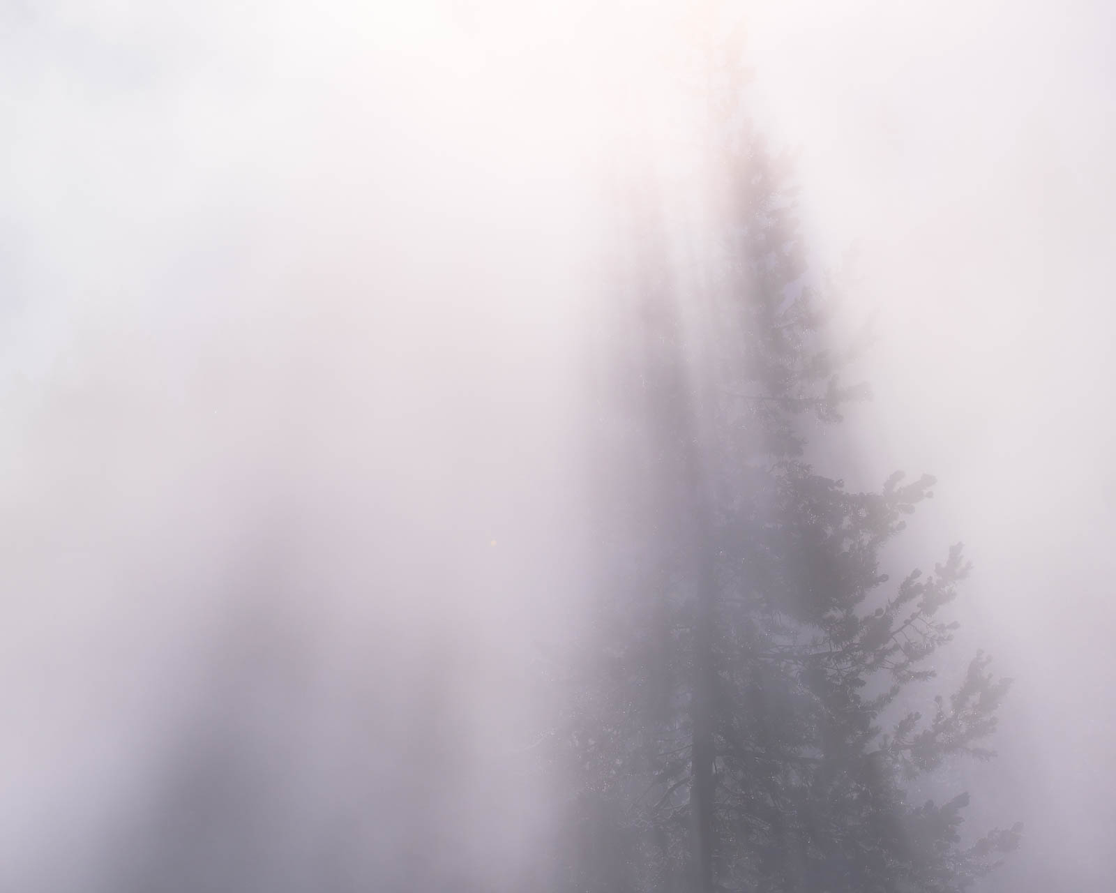 Wyoming, fog, landscape orientation, steam, tree, white, yellowstone national park, ynp, rocky mountains