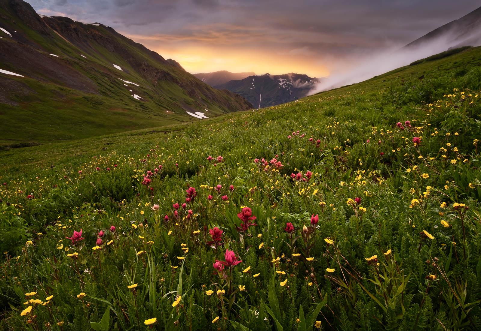 Flower, Time, Wildflower, colorado, fog, green, landscape orientation, mountains, orange, red, san juan mountains, storm, sunset...