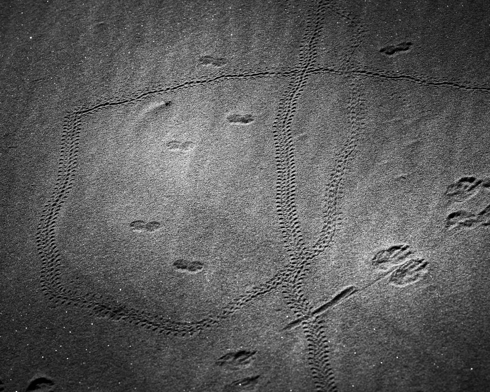 Animal, Nature, black and white, dunes, footprints, sand