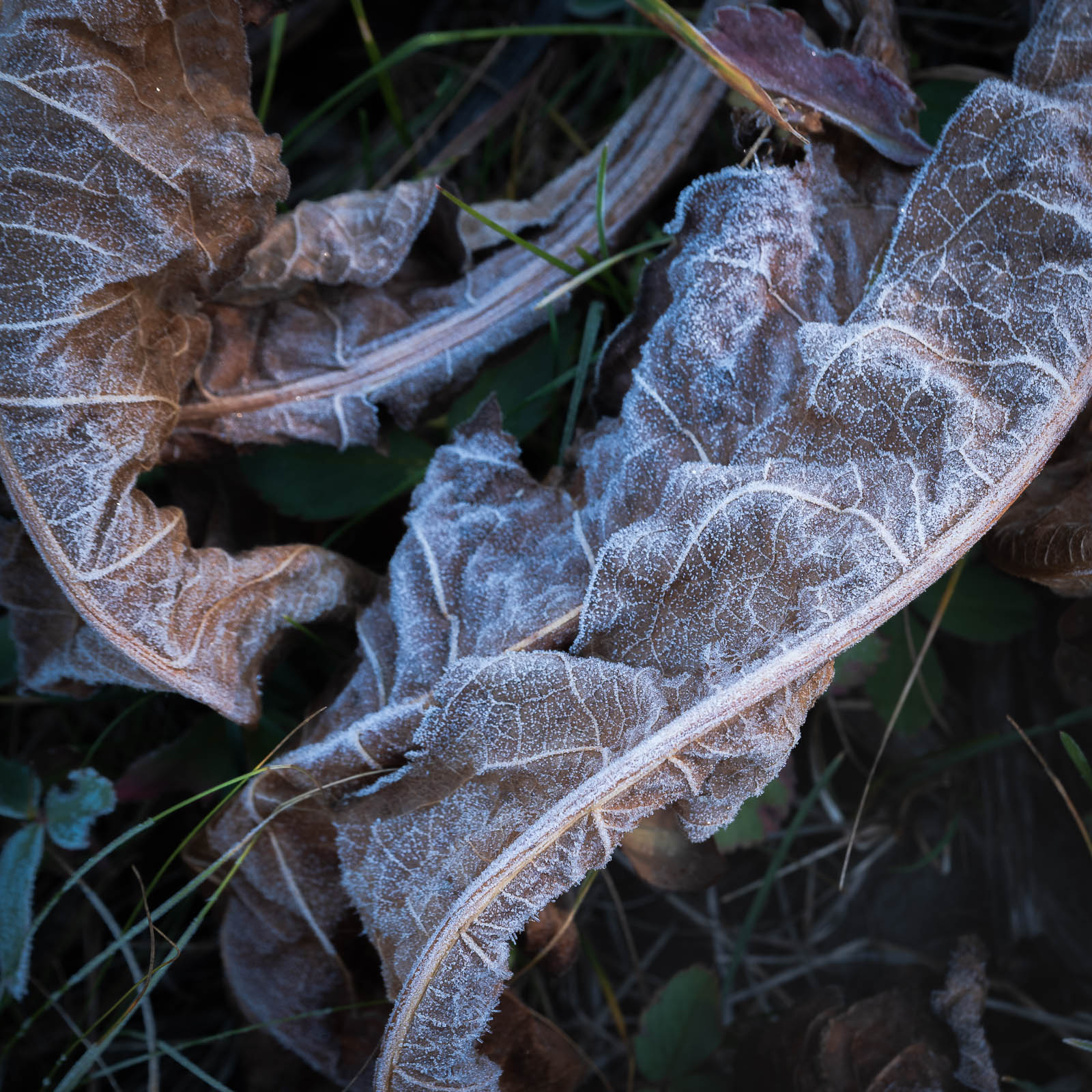 blue, colorado, crested butte, fall, frost, rocky mountains, square